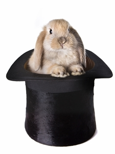 Rabbit_in_Hat