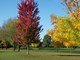 Fall_Colors_2-2